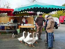 Markets in the Dordogne-Lot from holiday park cottages of Domaine de Gavaudun